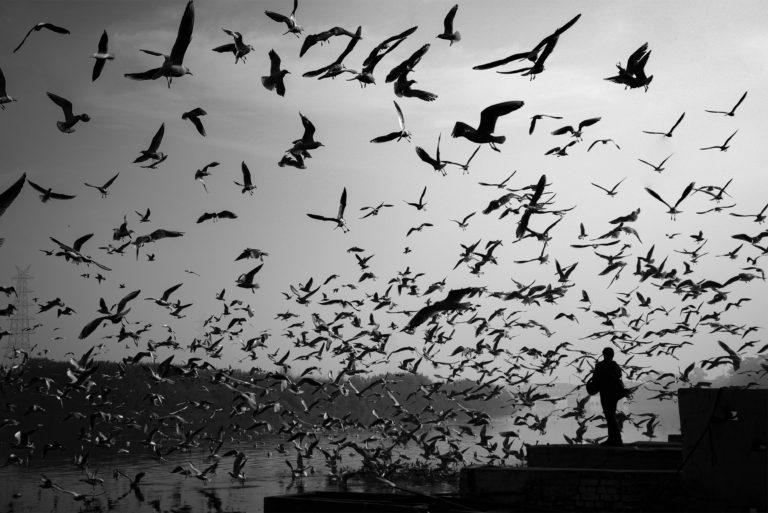 Fear - Person feeding birds